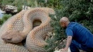 getlinkyoutube.com-Las 5 Serpientes Más Grandes del Mundo