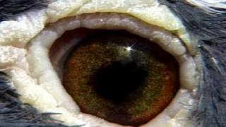 getlinkyoutube.com-Rob Woolliss Eyesign Tips