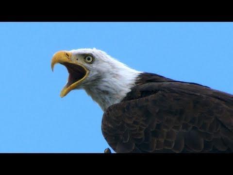 Inside Birding: Behavior