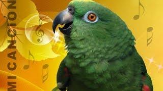 getlinkyoutube.com-Loro canta en su propio idioma