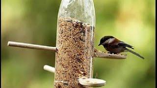 getlinkyoutube.com-bird food & watering Gardening Sekho in Hindi/Urdu