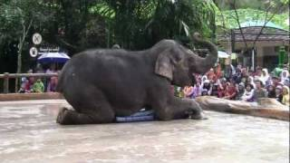 getlinkyoutube.com-Atraksi Gajah di Taman Safari Indonesia