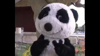 Aniversário Canal Panda