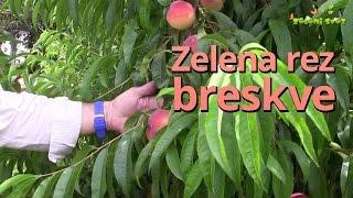 getlinkyoutube.com-Zelena rez breskve