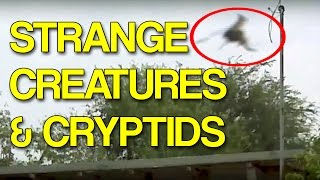 getlinkyoutube.com-More Strange Creatures and Cryptids Caught on Tape