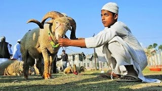 getlinkyoutube.com-Eid al-Adha 2016 around the World Documentary celebrations Mubarak عيد الأضحى
