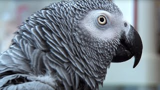 getlinkyoutube.com-Einstein vs Griffin - The World's Smartest Parrots - Extraordinary Animals - Earth