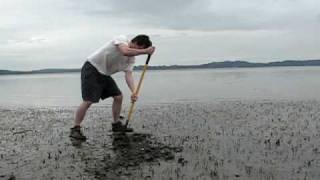 getlinkyoutube.com-Man Digs Giant Clam (Geoduck) on edge of Puget Sound.