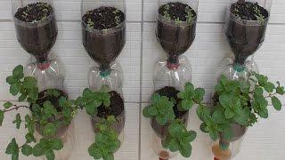 getlinkyoutube.com-Bottle Garden