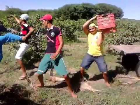 Agricultores danam harlem shake em pernambuco