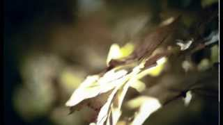"Ludovico Einaudi ""Walk"" (Official Video)"