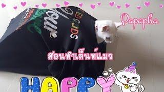 getlinkyoutube.com-สอนทำเต็นท์สำหรับแมว By Papapha DIY