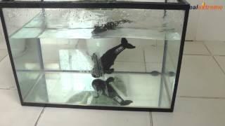 getlinkyoutube.com-Whale Style Waterproof Diving Tumbling Water Toy -DX