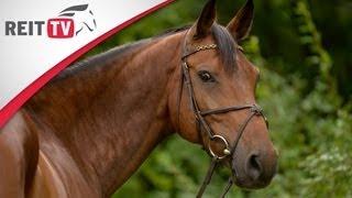 Tipps zur Pferdefotografie - So macht ihr tolle Bilder von eurem Pferd