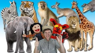 getlinkyoutube.com-What Do You See? Song | Wild Animals | Learn English Kids