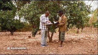Swengere: Mu diary mulimu ssente