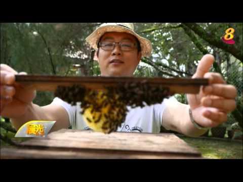 《新加坡小惊喜》4月26日:自家花园养蜂 蜜蜂本地生存面临挑战
