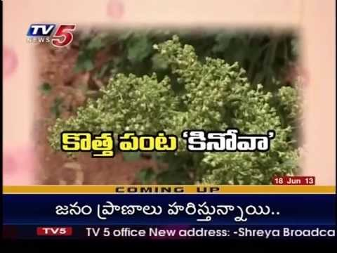 TV5 News telecast about Quinoa Demo-Plot in the premises of APARD on 18-06-2013