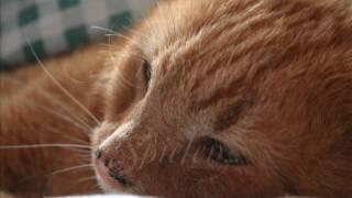 getlinkyoutube.com-Heinrich, die schönste Katze der Welt, sagt auf wiedersehen!