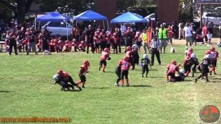 "getlinkyoutube.com-Young Tiny Mites ""Journe Wright"" Vacaville Bengals Football 2012 Highlights"