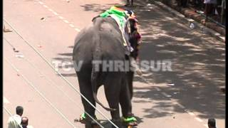 getlinkyoutube.com-Violent Elephant in  thrissur Festival 2012