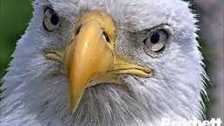 flushyoutube.com-Southwest Florida Eagle Cam