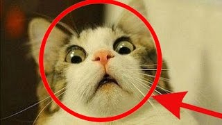 getlinkyoutube.com-TRY NOT TO LAUGH OR GRIN - Funny Animals Compilation 2016 ! Part 1