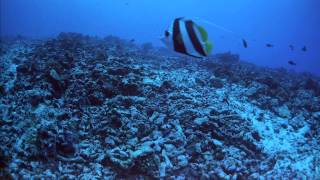 getlinkyoutube.com-Imax Coral Reef Adventure Hdtv 1080 Hdmi