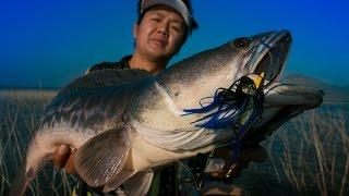 getlinkyoutube.com-ชะโดป่า กัดเหยื่อผิวน้ำ Slater # ความเชื่อ -โจอี้บอย-บิว The Voice