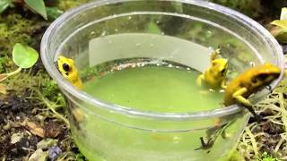 Ep. 29 POISON DART FROG - HEALTH ISSUES - SLS STS VITAMIN DEFICIENCY EP. 2