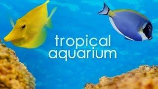 Vancouver Tropical Aquarium in 4K