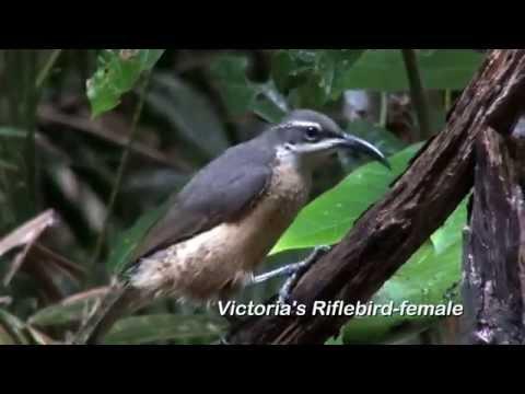 Birding North-East Queensland: 89 Australian Birds