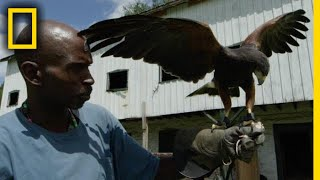 This Man Turned His Life Around by Mastering Falconry | National Geographic
