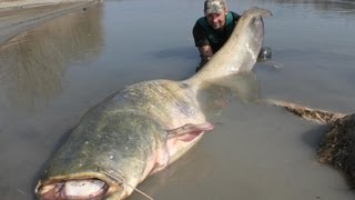 getlinkyoutube.com-CATFISH: YURI GRISENDI FIGHT A MONSTER OVER 100 KG by CATFISHING WORLD