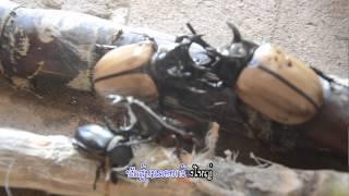 getlinkyoutube.com-นักสู้แห่งขุนเขา(แมงกว่าง) HD ฝาแฝด สตูดิโอ น่าน