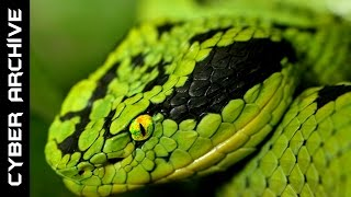 getlinkyoutube.com-15 Most Venomous Snakes in the World