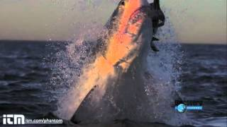 getlinkyoutube.com-Нападения акул