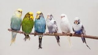 getlinkyoutube.com-كيف تصنع محمية للحيوانات البريه wildlife