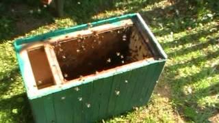 getlinkyoutube.com-Včely - začínám