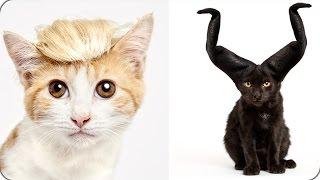 أغلى وأغرب 10 سلالات قطط في العالم