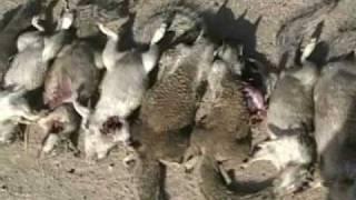 getlinkyoutube.com-.17HMR vs. Ground Squirrels