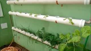 getlinkyoutube.com-Horta Hidropônica em Casa - Patrick Silva