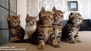getlinkyoutube.com-Funny Cats Choir | Dancing Chorus Line of Cute Kittens