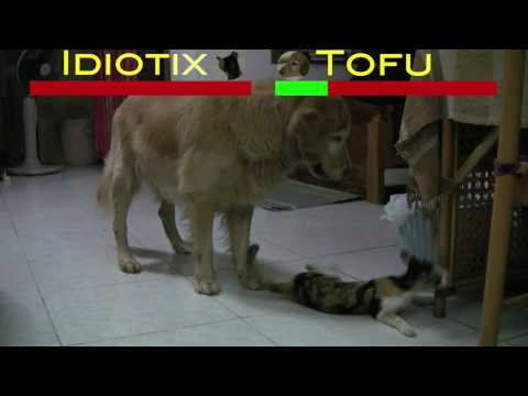 Cat vs Dog Epic Battle