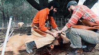 How to Butcher A PIG Like Hand Hewn Farm