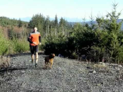 Koppel för löpande hundar -Jesper Lövkvist