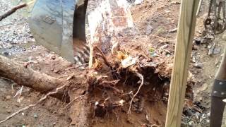 getlinkyoutube.com-Heavy Equipment Case 580N Backhoe Working on a Stump
