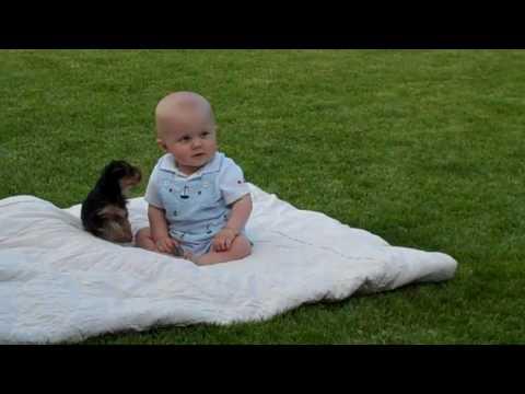 Maltesepuppies Youtube on En Youtube   089