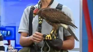 getlinkyoutube.com-สัตว์เลี้ยงแนวใหม่ นกพันธ์ุล่าเหยื่อ