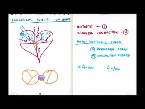 ELECTRICAL ACTIVITY OF HEART 2